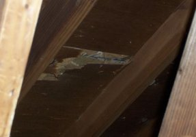 Picture of PLYWOOD DELAMINATION / more info in our website